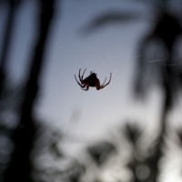 2010-09-09-Spider in oasis in Tunisia